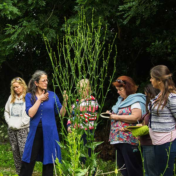 Nikki talking to a group with a large Chicory